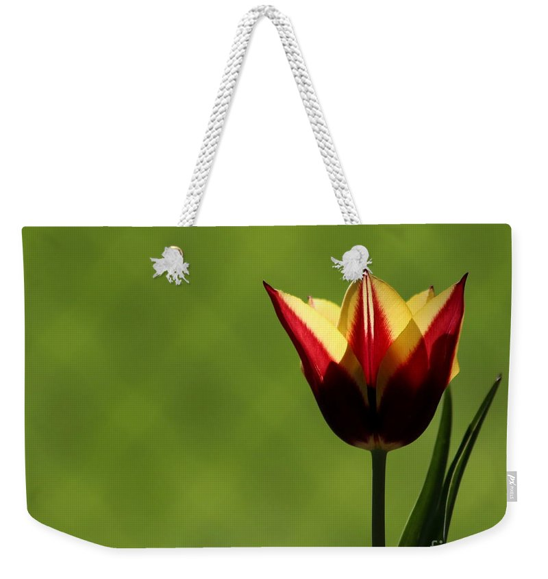 Tulip Weekender Tote Bag featuring the photograph Red And Yellow Tulip by Kenny Glotfelty