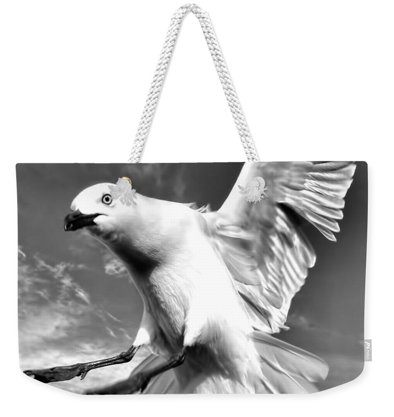 Amanda Stadther Weekender Tote Bag featuring the photograph Red Billed Seagull In Black And White by Amanda Stadther