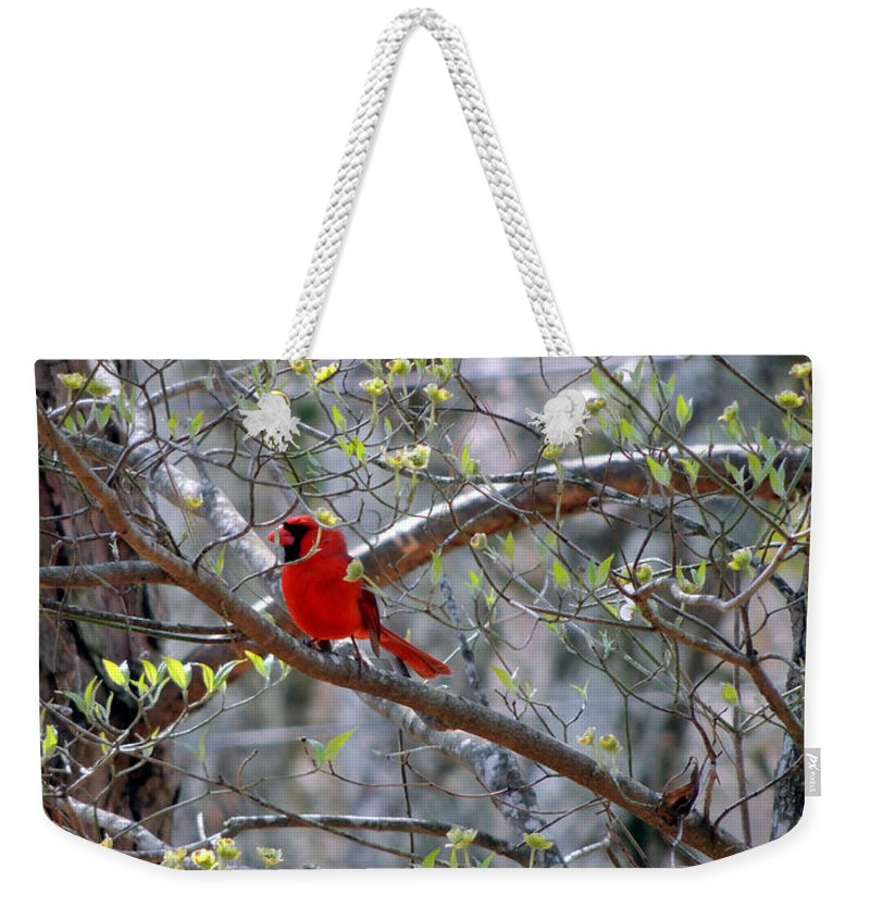 Digital Photography Weekender Tote Bag featuring the photograph Red Bird In Dogwood by Kim Pate
