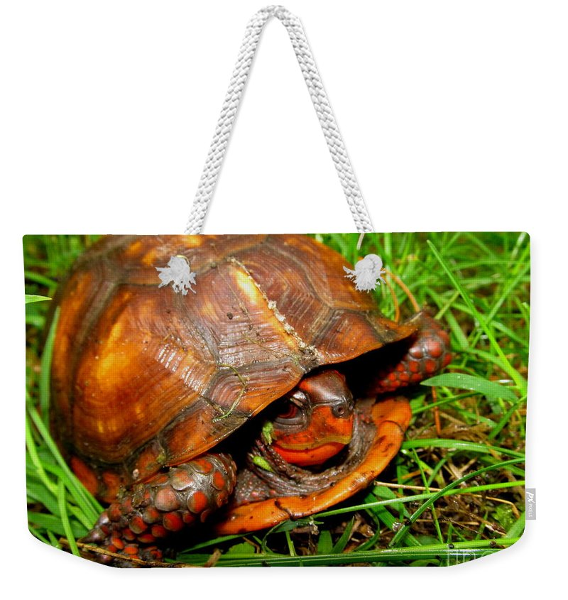 Red Box Turtle Red Reptiles Red Turtles North American Turtles Eastern Box Turtles Appalachian Reptiles Appalachian Turtles Pennsylvania Box Turtle Forest Creatures Nature Prints Preserve Biodiversity Natural Design Herpetology Rare Creatures Of The Forest Beings Natural Design Exotic Nature Conservancy Fine Art Awesome Images Perfect Prints Smiling Turtle Grin Red Tortoise North American Turtles Of Appalachia Biodiversity Cute Critters Cute Animals Sierra Club Green Peace Pa Parks Weekender Tote Bag featuring the photograph Red Box by Joshua Bales