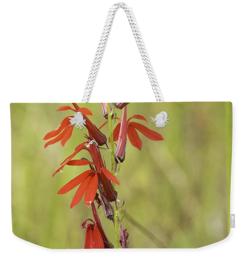 Obelia Cardinalis Weekender Tote Bag featuring the photograph Red Cardinal Flower by Les Palenik