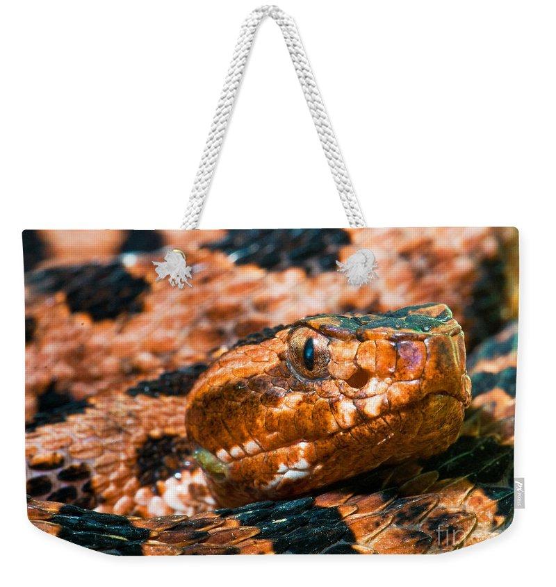 Animal Weekender Tote Bag featuring the photograph Red Carolina Pygmy Rattlesnake by Millard H Sharp