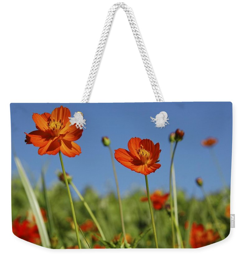 Cosmos Weekender Tote Bag featuring the photograph Red Cosmos Flower by Taiche Acrylic Art