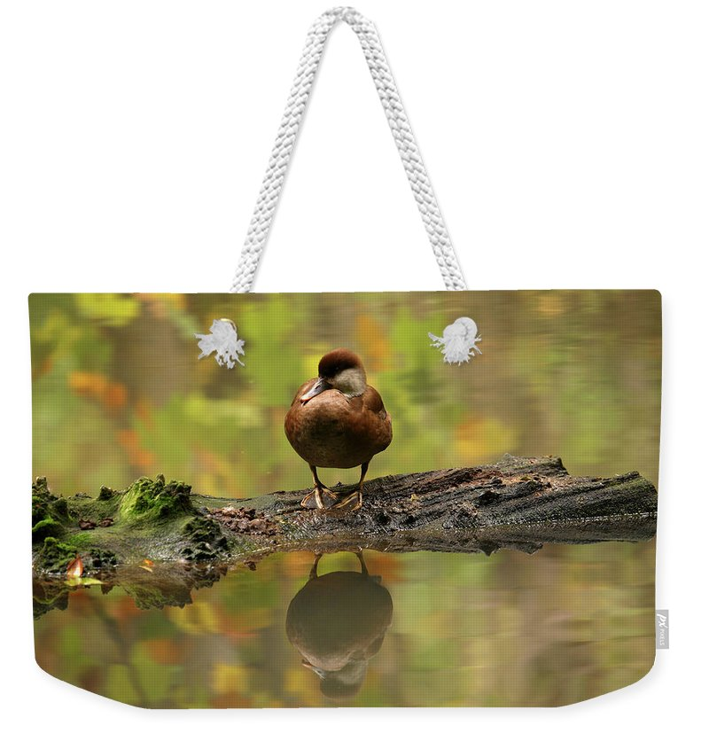 Red-crested Pochard Weekender Tote Bags