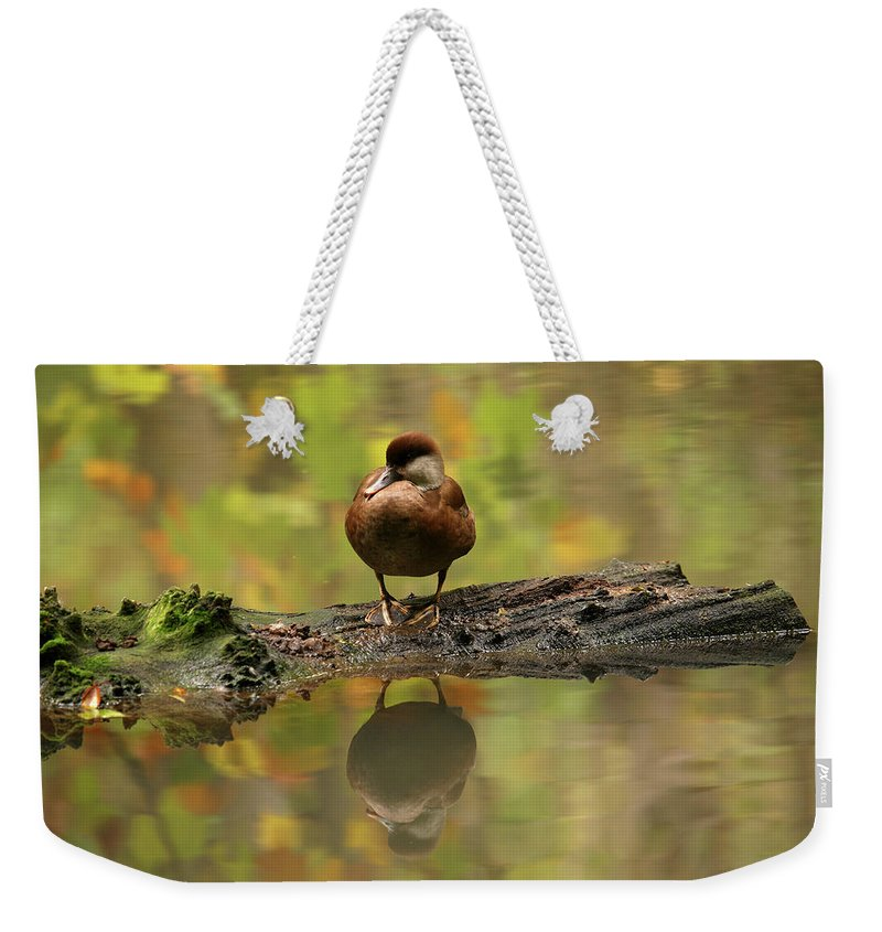 Wildlife Weekender Tote Bag featuring the photograph Red Crested Pochard Female Netta Rufina by David Santiago Garcia