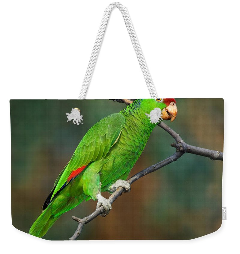 Red-crowned Amazon Weekender Tote Bag featuring the photograph Red-crowned Amazon by Anthony Mercieca