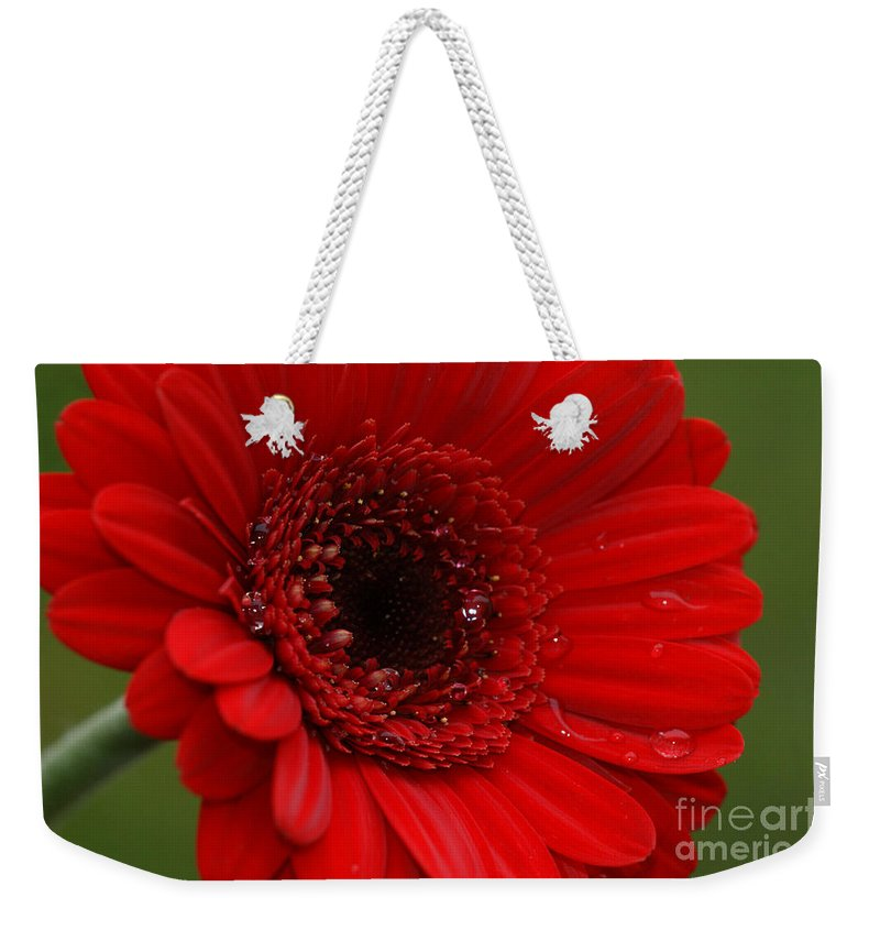 Red Weekender Tote Bag featuring the photograph Red Daisy by Carol Lynch