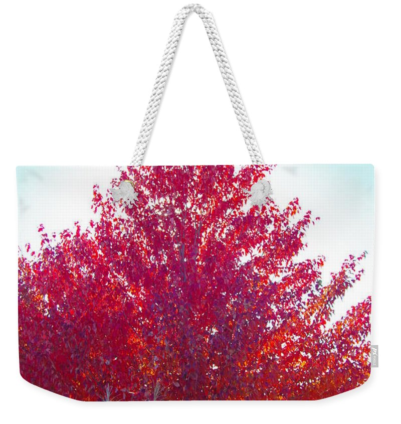 Fall Tree Colors Weekender Tote Bag featuring the photograph Red Explosion by Mike Wheeler