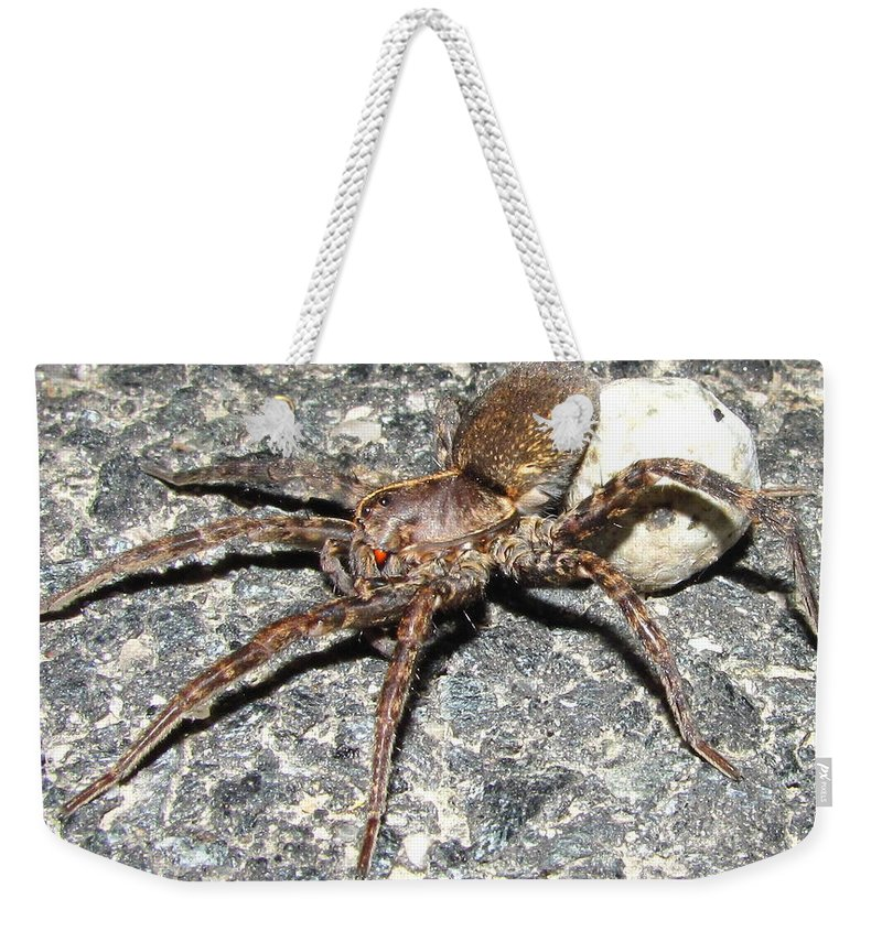 Red Eyed Hunting Spider Images Maryland Hunting Spider Prints Arachnid Mother Spider Images Spider Egg Sac Images Forest Hunter Entomology Big Spider Prints Giant Wolf Spider Prints Big Fishing Spider Posters Weekender Tote Bag featuring the photograph Red Eye by Joshua Bales