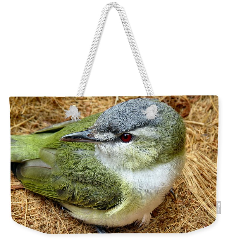 Red Weekender Tote Bag featuring the photograph Red Eyed Viero by Art Dingo