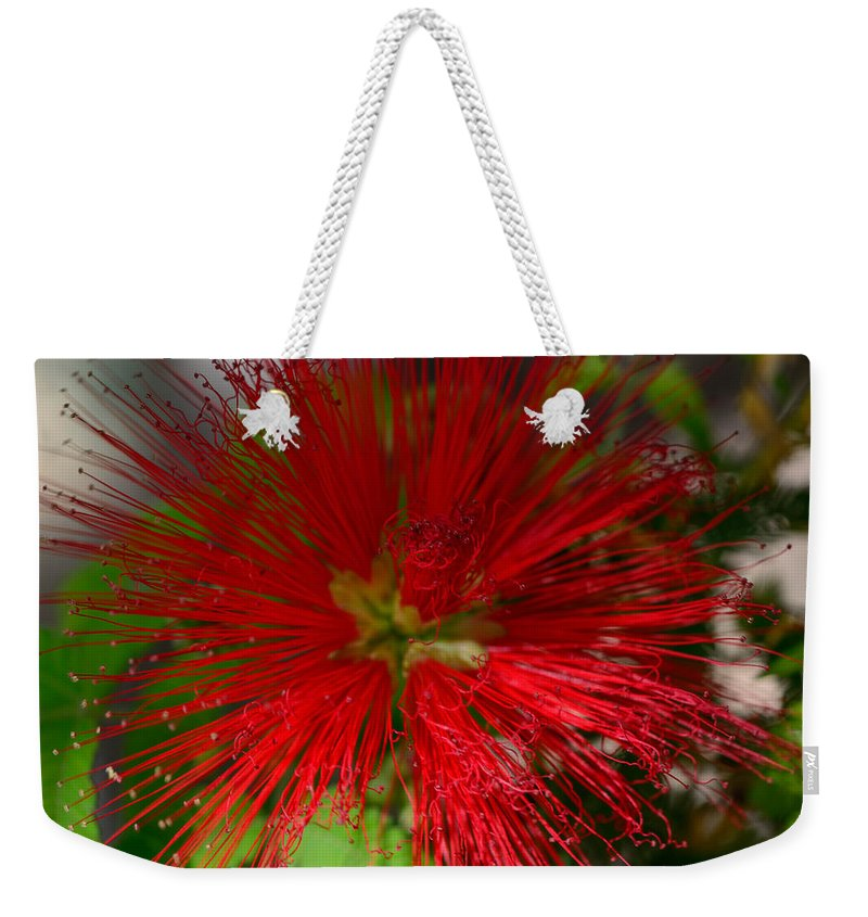 Baja Weekender Tote Bag featuring the photograph Red Fairy Duster Calliandra Californica by Michael Moriarty