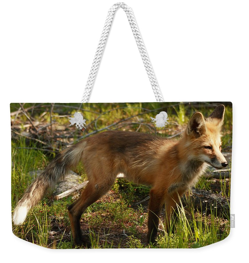Nature Weekender Tote Bag featuring the photograph Red Fox by David Salter