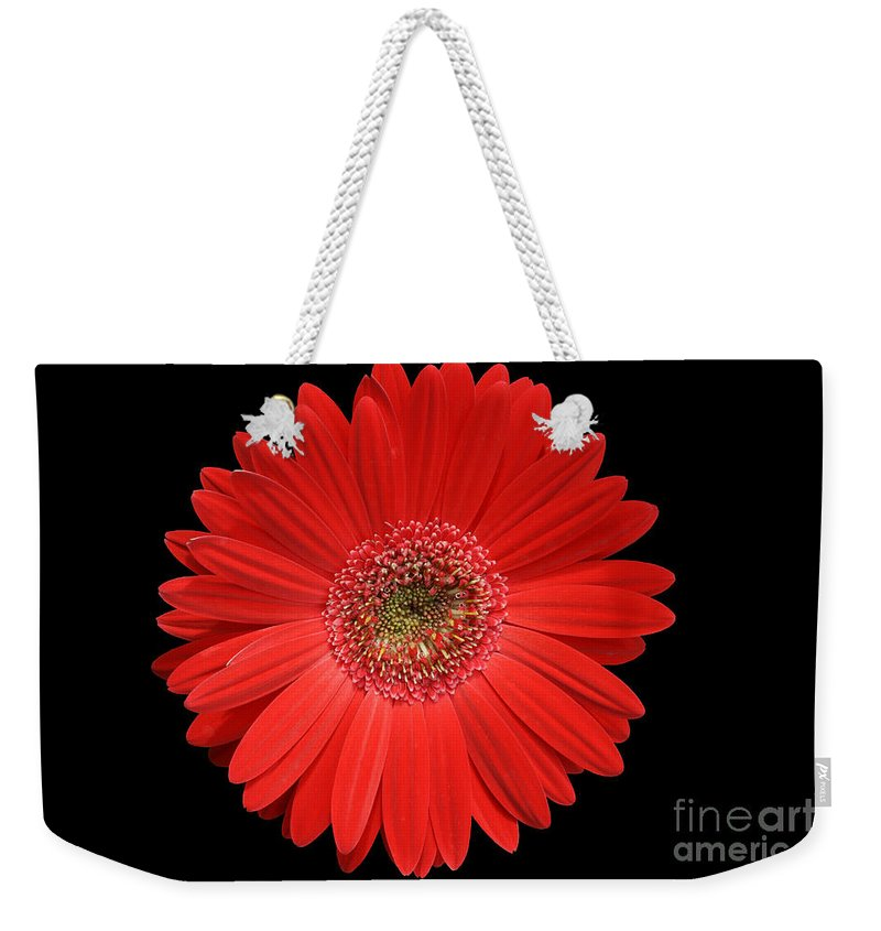 Gerbera Weekender Tote Bag featuring the photograph Red Gerber Daisy #2 by Judy Whitton