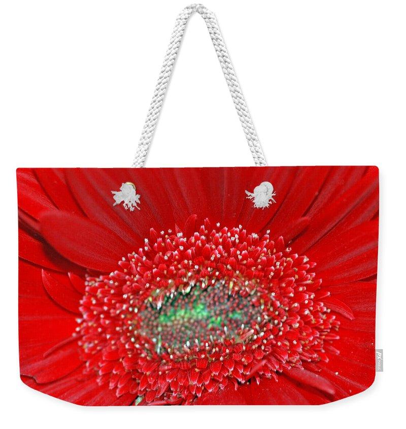 Red Weekender Tote Bag featuring the photograph Red Gerbera Flower by Optical Playground By MP Ray