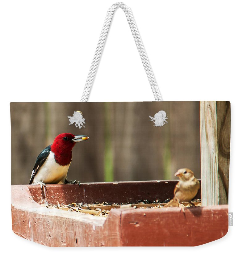 Heron Heaven Weekender Tote Bag featuring the photograph Red-headed Woodpecker Feeding by Edward Peterson