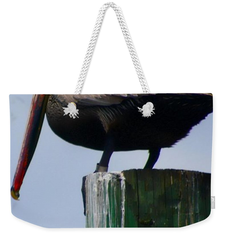 Pelican Weekender Tote Bag featuring the photograph Red Heads by Debra Forand