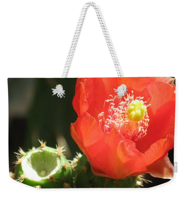 Cactus Weekender Tote Bag featuring the photograph Hot Red Cactus by Christiane Schulze Art And Photography