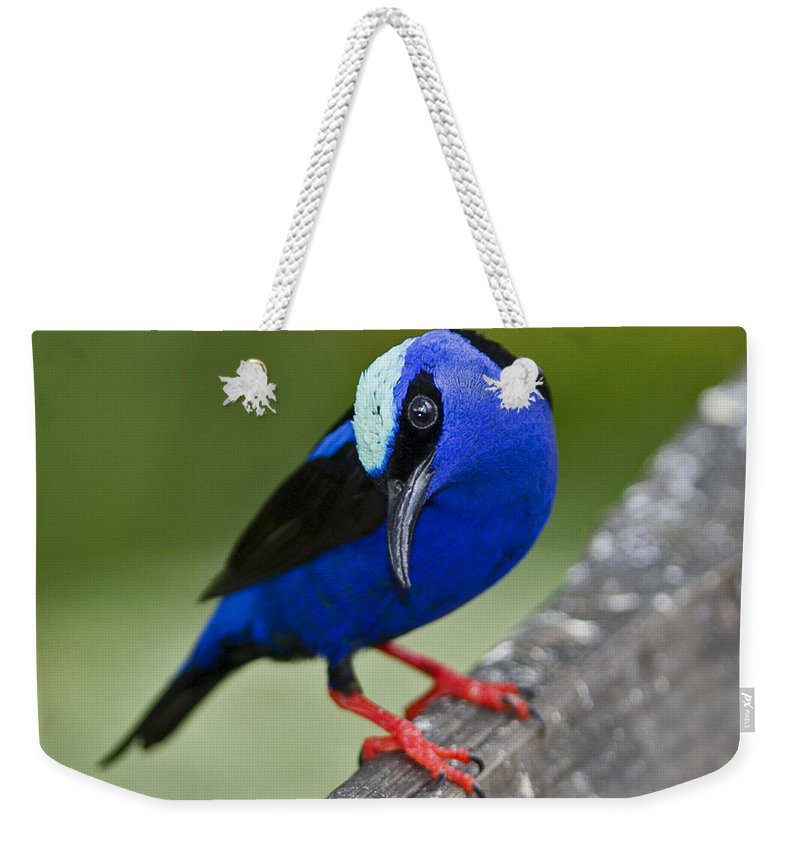 Red-legged Honeycreeper Weekender Tote Bag featuring the photograph Red-legged Honeycreeper.. by Nina Stavlund