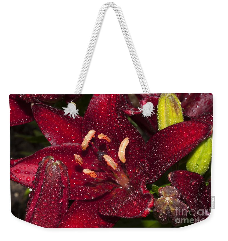 Lilium Weekender Tote Bag featuring the photograph Red Lily Raindrops by Steve Purnell
