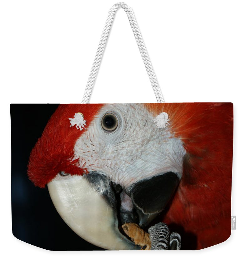 Red Macaw Weekender Tote Bag featuring the photograph Red Macaw by Ernie Echols
