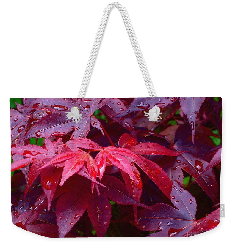 Rain Weekender Tote Bag featuring the photograph Red Maple After Rain by Ann Horn