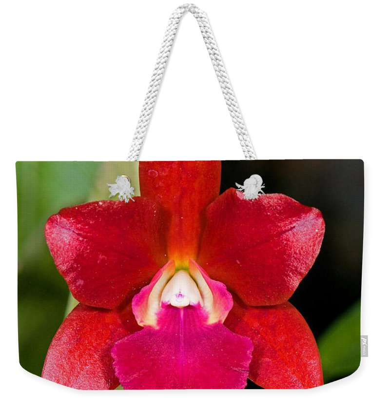 Nature Weekender Tote Bag featuring the photograph Red Orchid by Millard H. Sharp