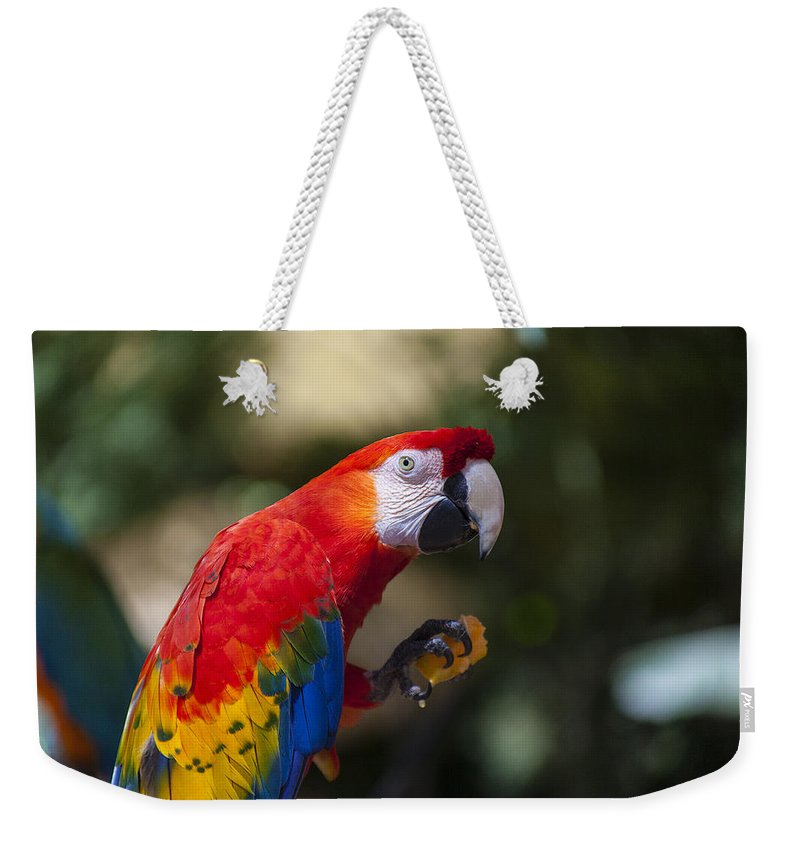 Parrot Weekender Tote Bag featuring the photograph Red Parrot by Garry Gay