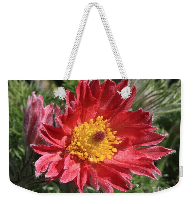 Red Pasque Flower Weekender Tote Bag featuring the photograph Red Pasque Flower by Carol Groenen