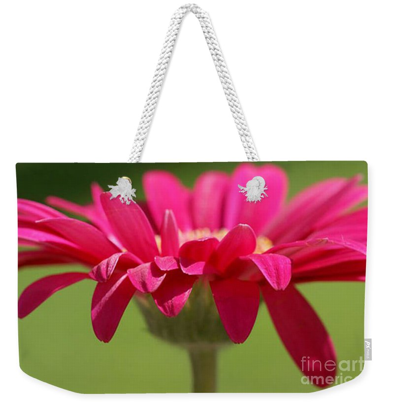 Pink Weekender Tote Bag featuring the photograph Red Pink Daisy by Carol Lynch