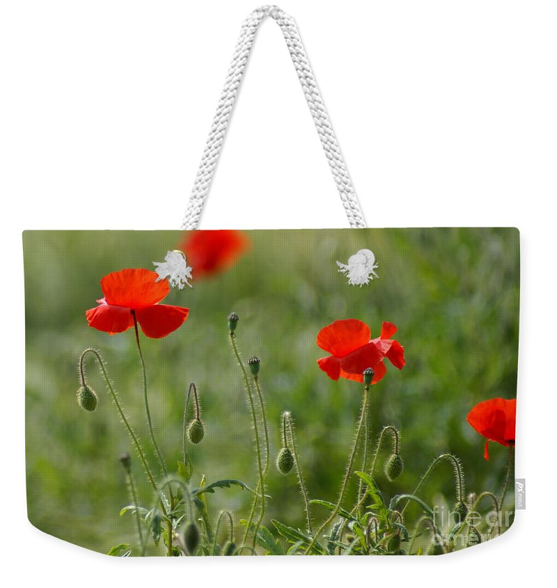 Poppies Weekender Tote Bag featuring the photograph Red Poppies 2 by Carol Lynch