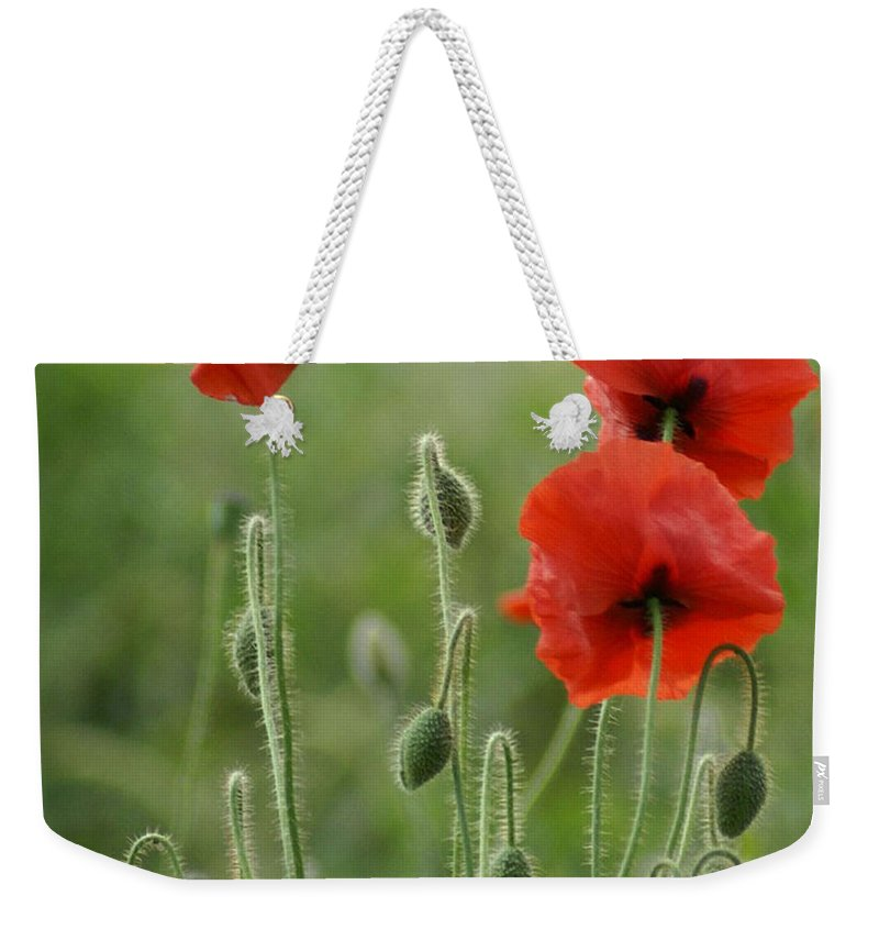 Poppies Weekender Tote Bag featuring the photograph Red Red Poppies 1 by Carol Lynch