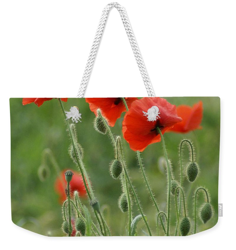 Poppies Weekender Tote Bag featuring the photograph Red Red Poppies 2 by Carol Lynch