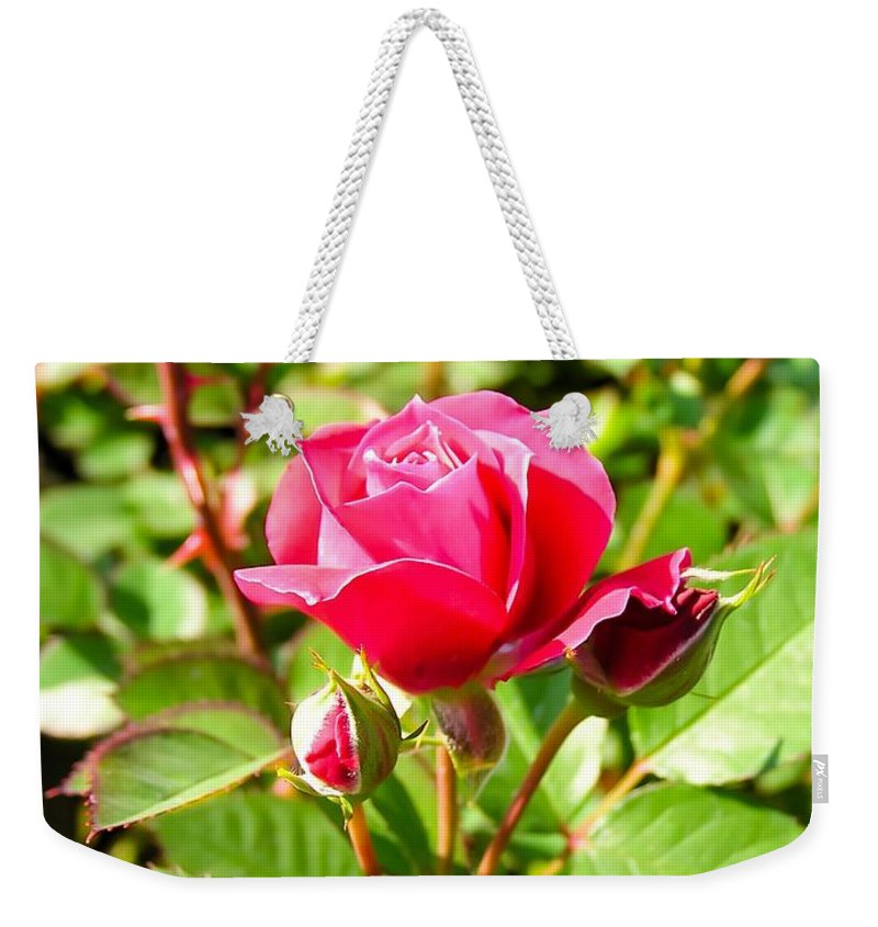 Pink Rose Buds Weekender Tote Bag featuring the photograph Pink Rose Buds by Cynthia Woods