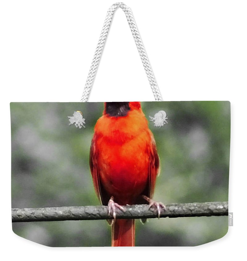 Red Bird Weekender Tote Bag featuring the photograph Red Royalty by Lizi Beard-Ward
