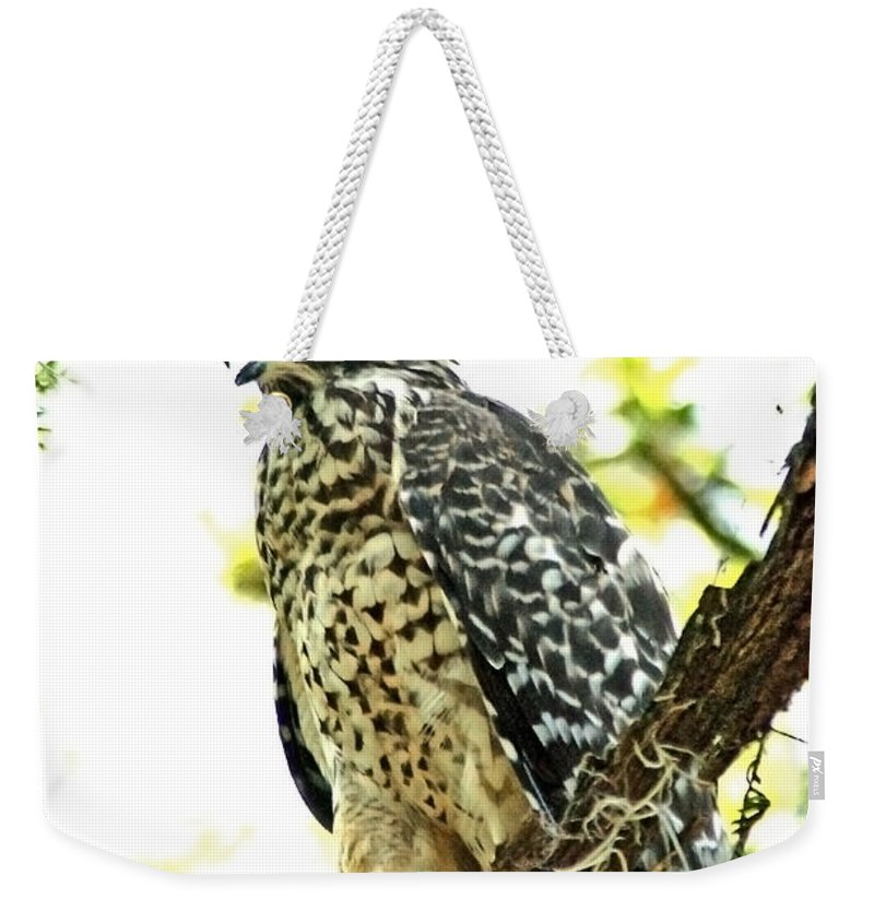 Red Shouldered Hawk Weekender Tote Bag featuring the photograph Red Shouldered View by Norman Johnson