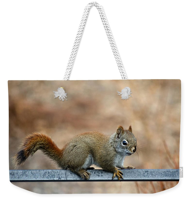 Squirrel Weekender Tote Bag featuring the photograph Red Squirrel On Patio Chair by Jeff Galbraith