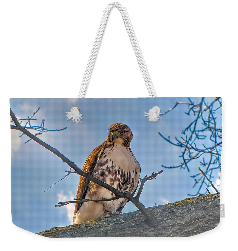 Hawk Weekender Tote Bag featuring the photograph Red-tailed Hawk by C H Apperson