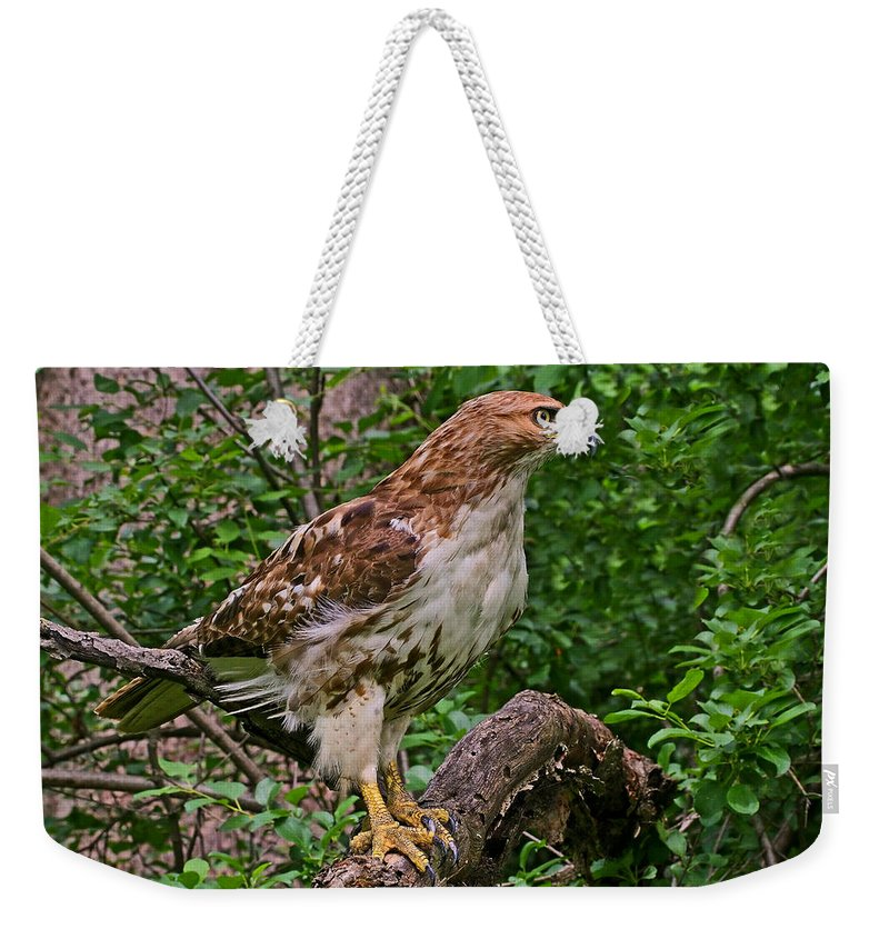 Bird Weekender Tote Bag featuring the photograph Red Tailed Hawk by John Absher
