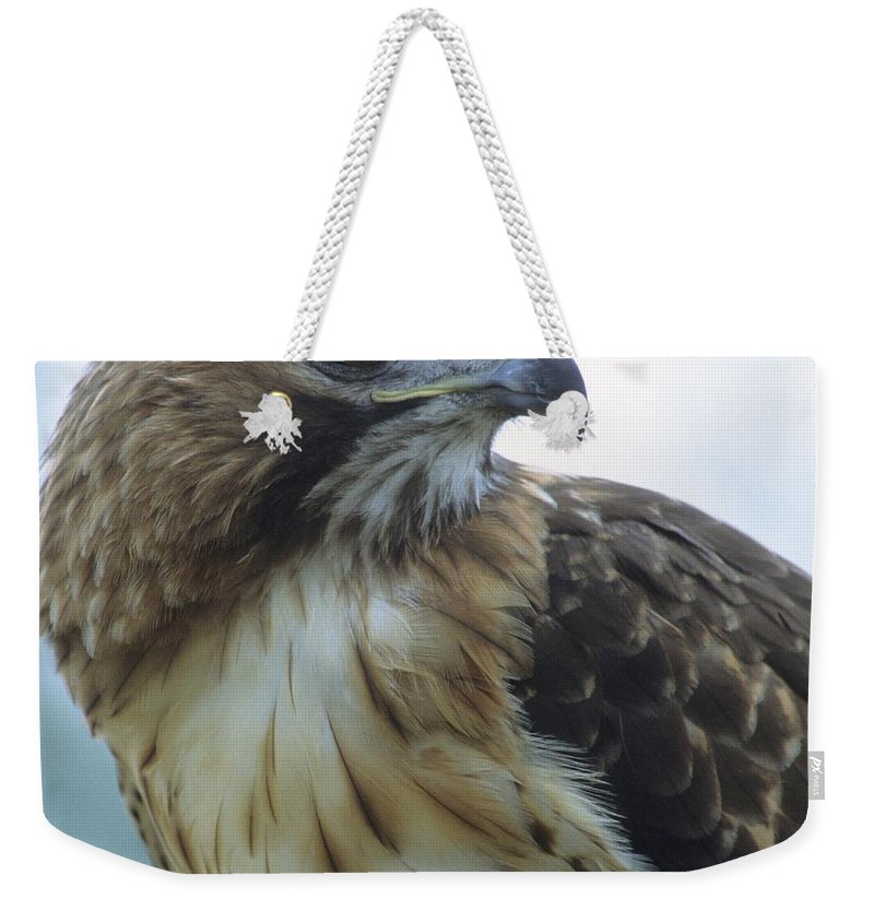 Hawk Weekender Tote Bag featuring the photograph Red-tailed Hawk Profile by Larry Allan
