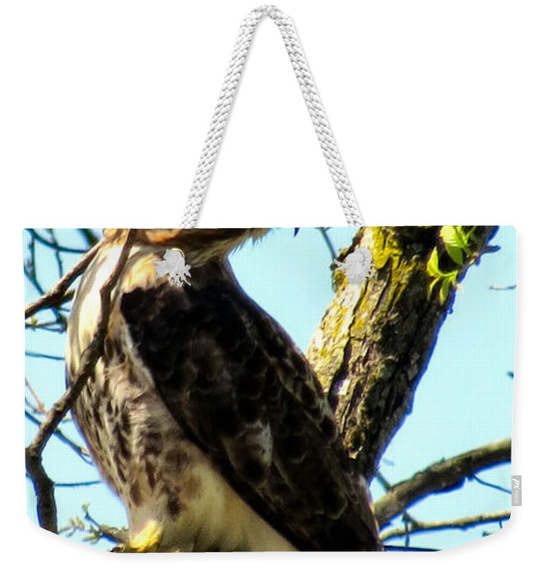 Red Weekender Tote Bag featuring the photograph Red Tailed Interest by Art Dingo