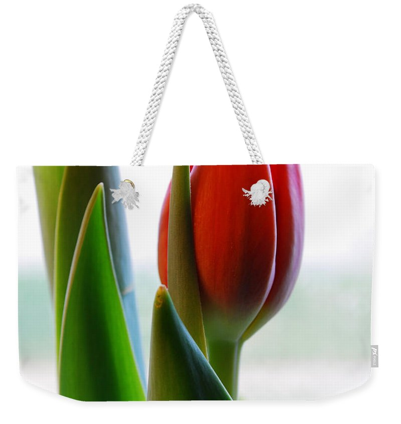 Tulip Weekender Tote Bag featuring the photograph Red Tulip Day 1 by Nancy Mueller