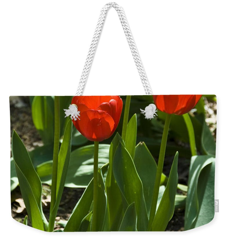 Flower Weekender Tote Bag featuring the photograph Red Tulips by Anthony Sacco