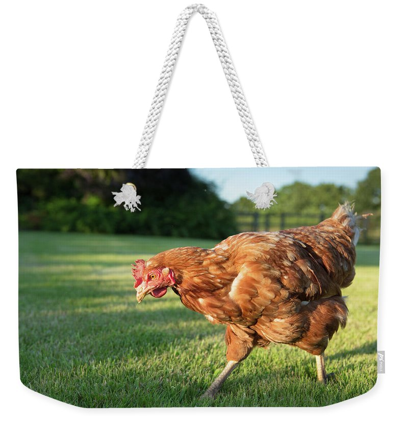 Grass Weekender Tote Bag featuring the photograph Red Warren Hen by Peter Chadwick Lrps