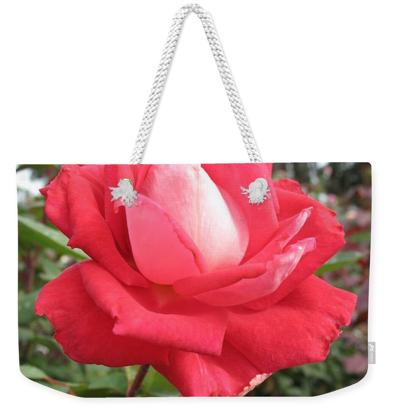 Rose Weekender Tote Bag featuring the photograph Red-white Rose by Christiane Schulze Art And Photography