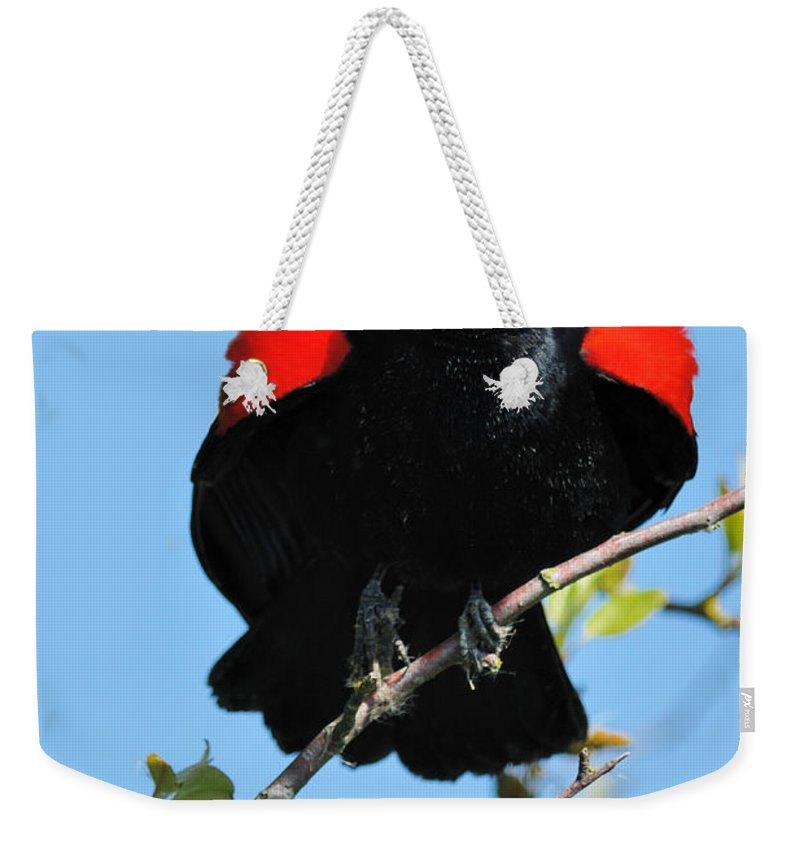 Red Wing Blackbird Weekender Tote Bag featuring the photograph Red Wing Blackbird 1 by Vivian Christopher