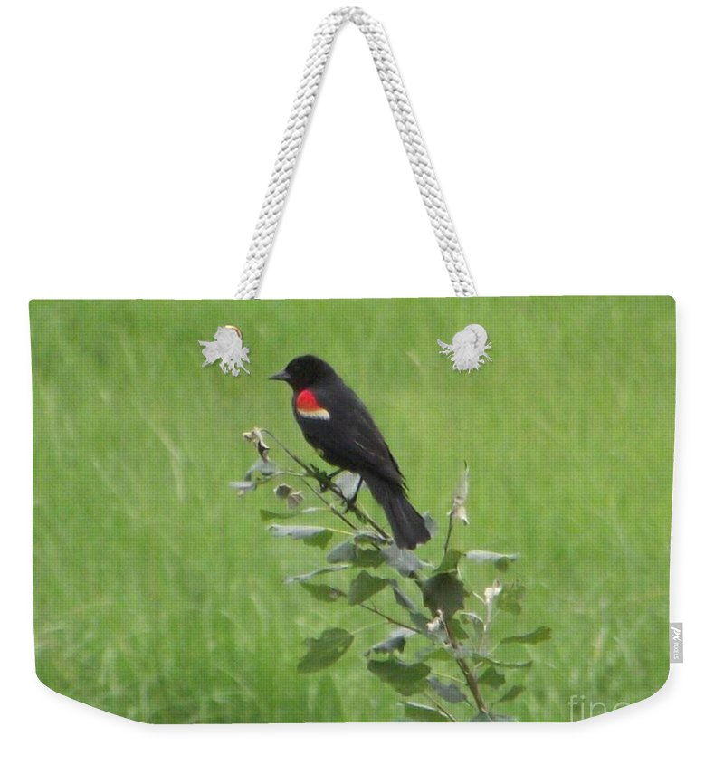 Red Wing Blackbird Weekender Tote Bag featuring the photograph Red Wing Blackbird by Michelle Welles