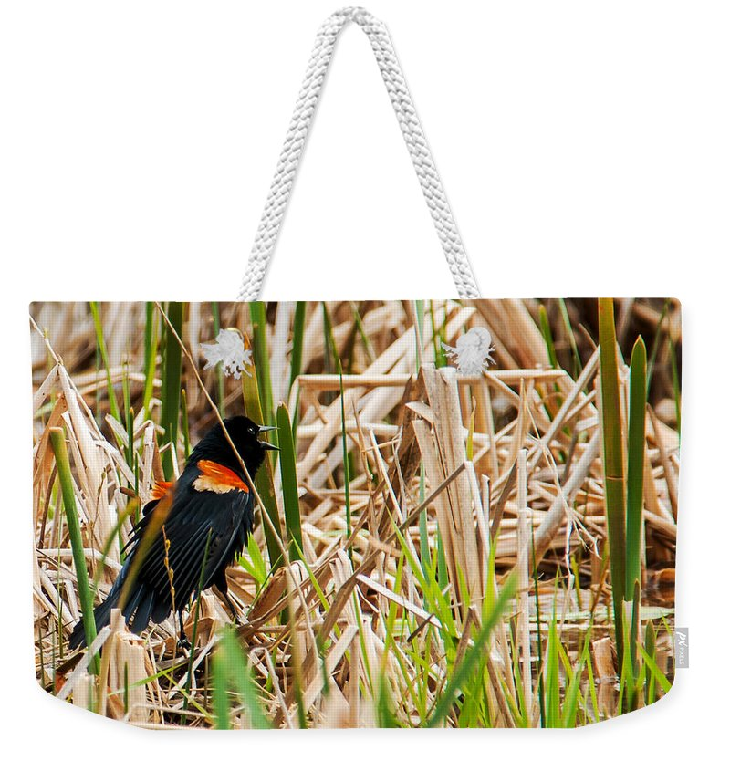 Wildlife Weekender Tote Bag featuring the photograph Red-wing Hiding by Edward Peterson