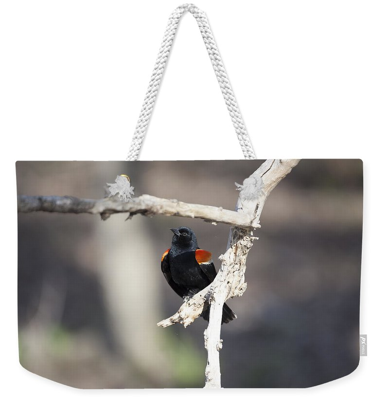 Agelaius Weekender Tote Bag featuring the photograph Red-winged Blackbird by Jack R Perry
