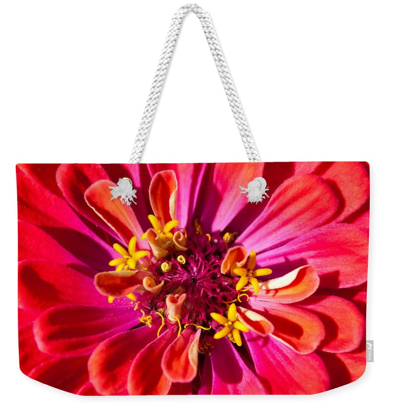 Zinnia Weekender Tote Bag featuring the photograph Red Zinnia by Megan Campbell