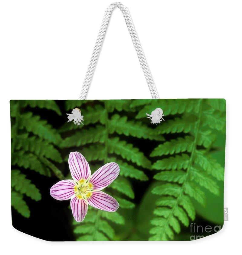 Redwood Sorrel Weekender Tote Bag featuring the photograph Redwood Sorrel Wildflower Nestled In Ferns by Dave Welling
